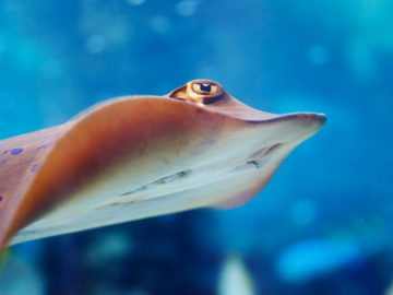 Are you being pursued by a stingray?